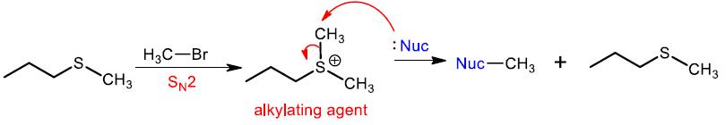 sulfide alkylation