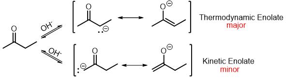 thermodynamic vs kinetic enolate